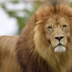 Problems faced by wild animals