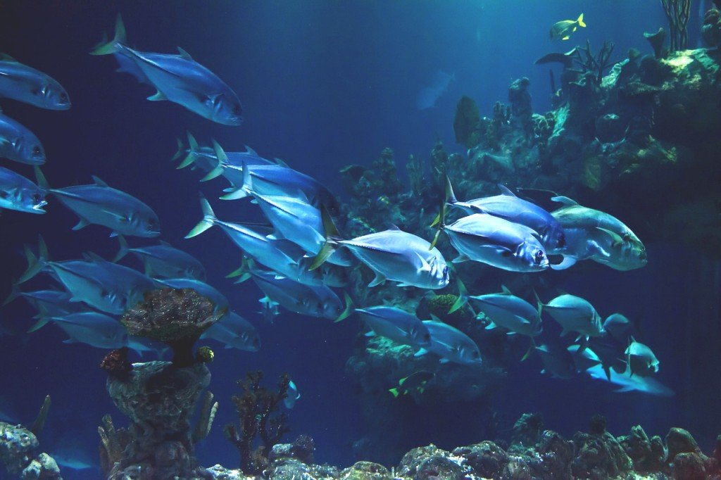 Unique Sea Life Forms That Inhabit the Dark Depths
