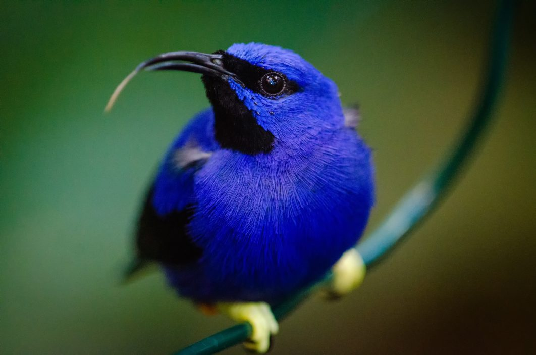 Bird Species That Are at The Verge of Extinction