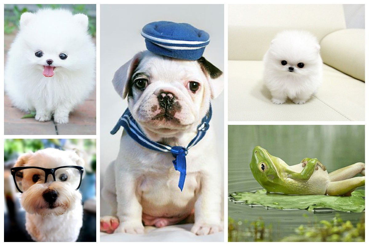 What Are The Top 5 Cutest Animals In The World?