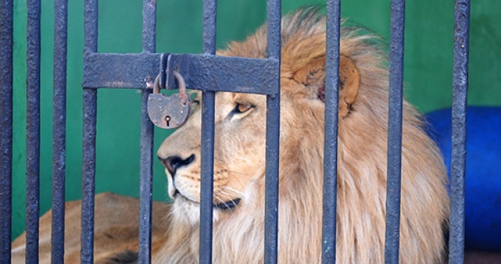 Issues Caused by Captivity to Animals (Concerning Zoos)