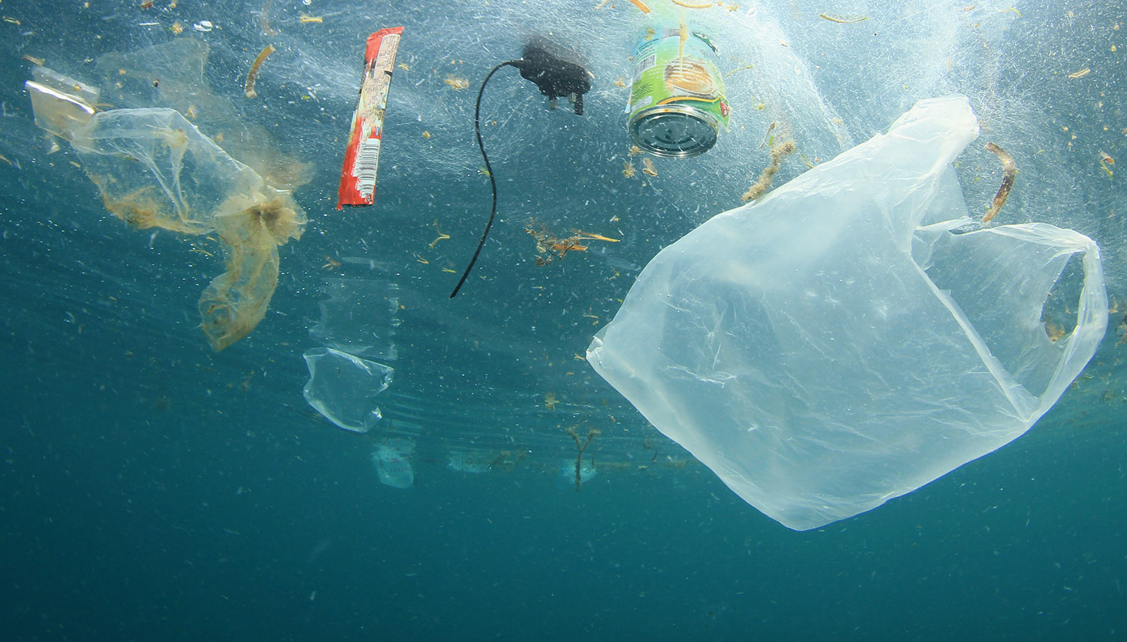 Plastic Bags Effects on Marine Animals and Our Responsibilities