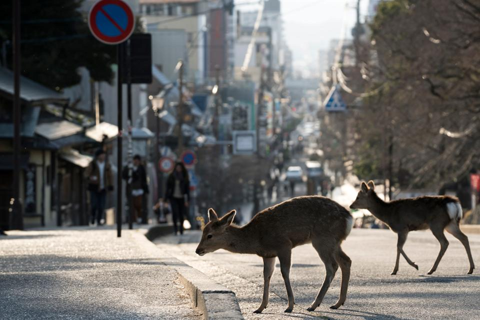 Wild Animals And Coronavirus Pandemic