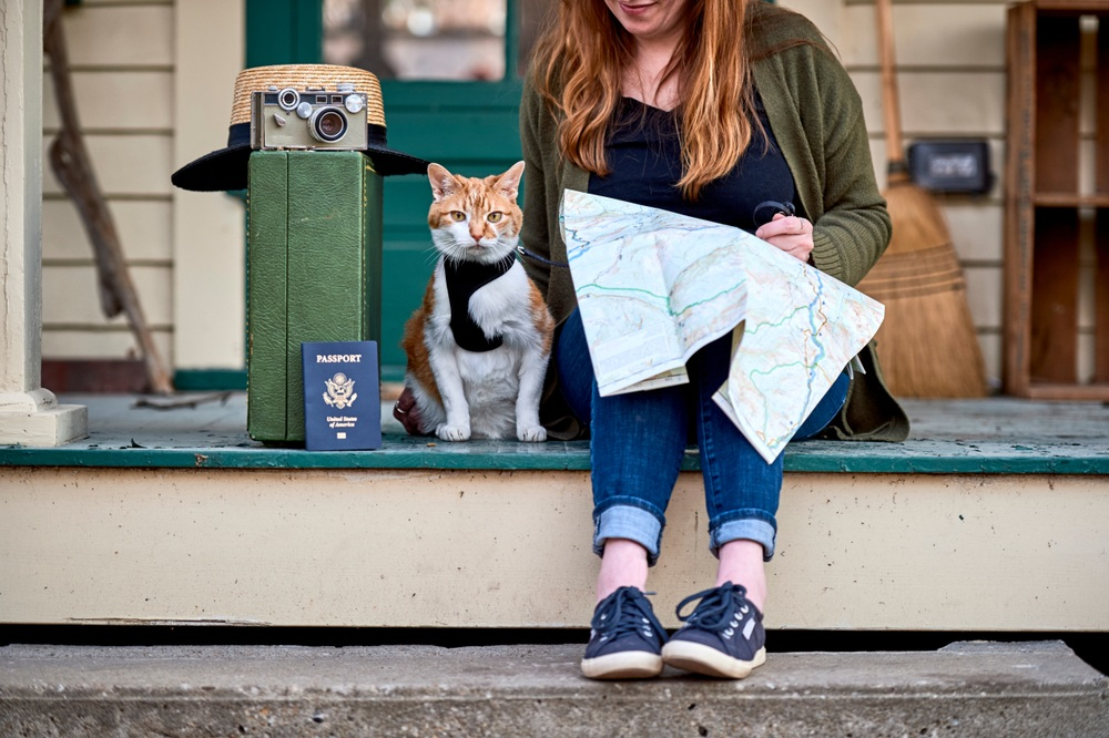 All You Need To Know When Traveling With Your Cat
