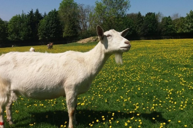 How to Keep Farm Animals Healthy?