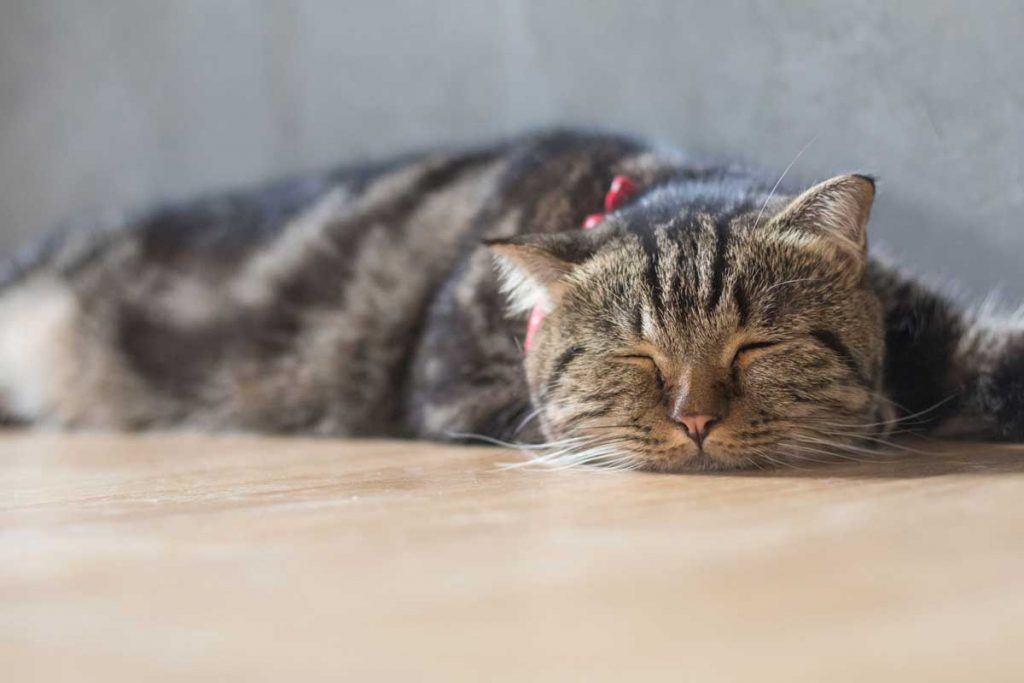 Study on Gastrointestinal Diseases in Cats