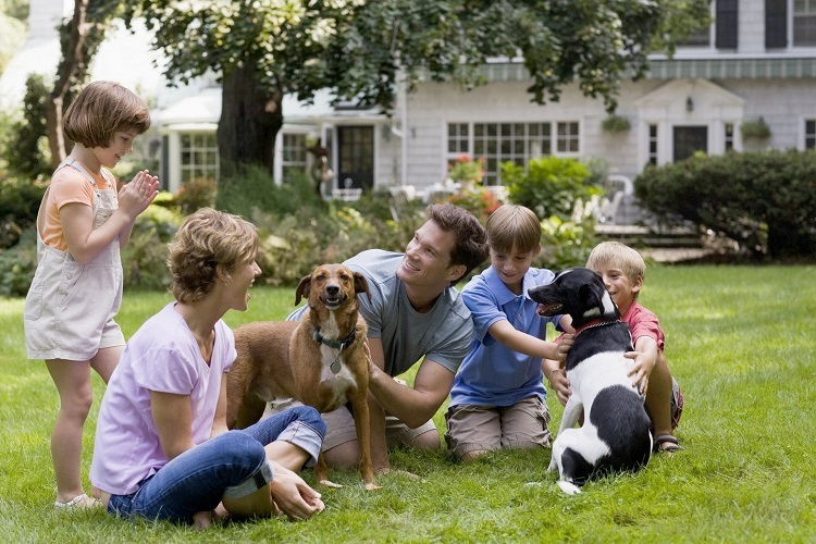 Why you should switch to Pet-friendly pest control this summer?