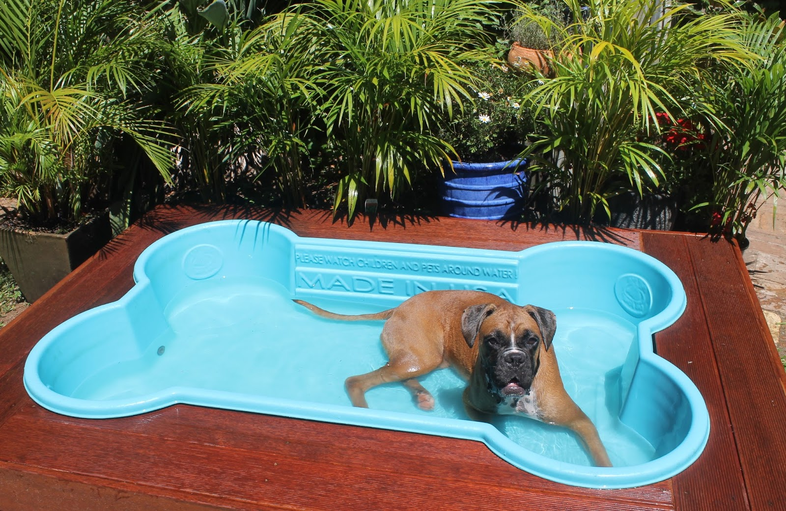 Pet Swimming Pool – Choose the Best Swimming Pool for your Pet
