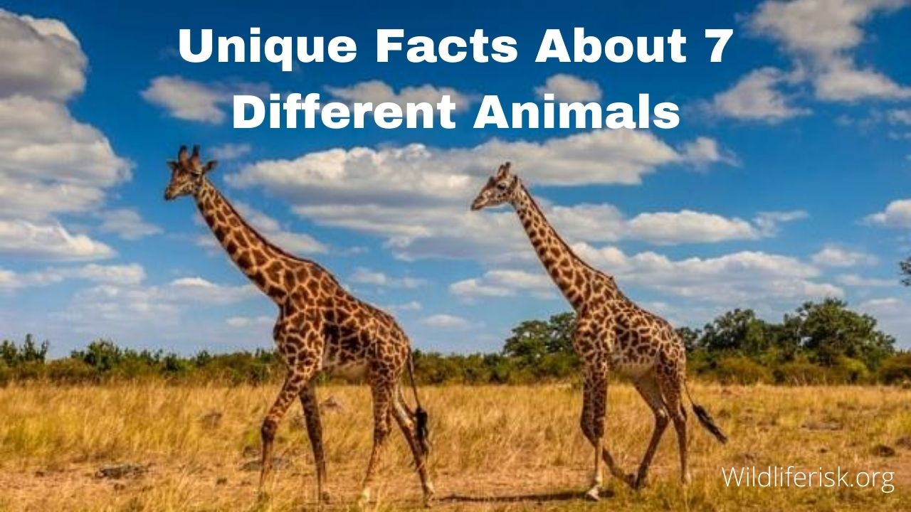 Unique Facts About 7 Different Animals