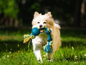 How to find Best Dog Toy to Train & Keep him Active