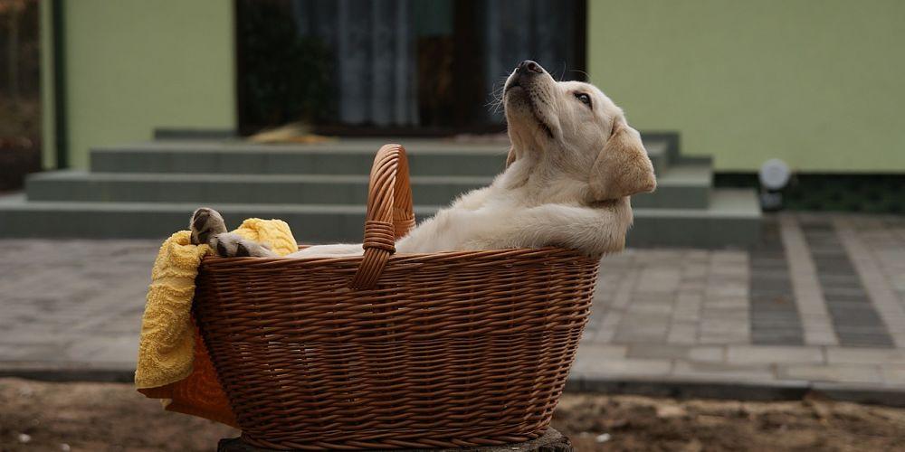 Bringing Home new Pup – Farmpally Checklists & Care guide