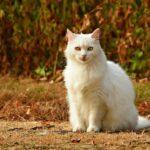 Common Cat Fur