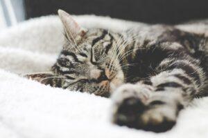 cat calming