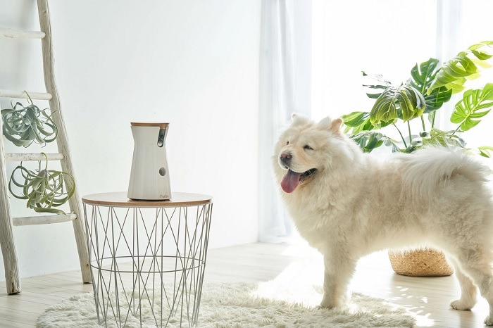 Different Gadgets for Human-Dog Interaction