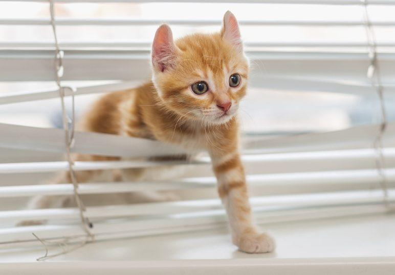 What Tips To Consider To Minimize Damage To Blinds By Pets?