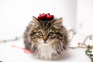 cute festive selfie