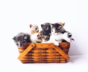 Give to the kitties in need