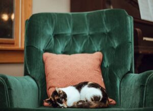 Pet-friendly Sofa