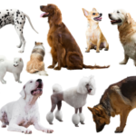 10 Most Popular Dog Breeds in Canada