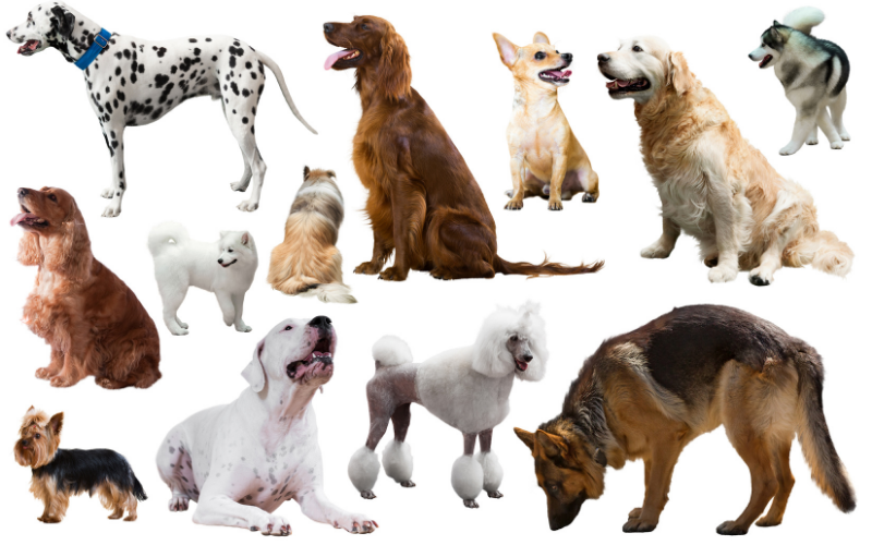 Dog Breeds in Canada