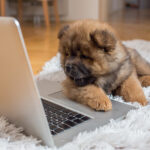Where to get the Pet Supplies Online?
