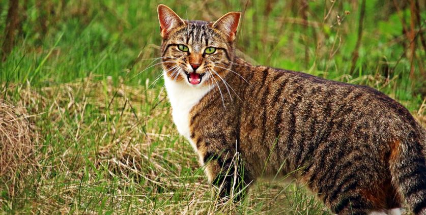 3 Reasons Why Understanding Cat Communication is Important