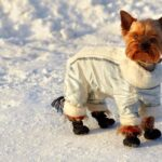 Why dog need A Jacket in winter?