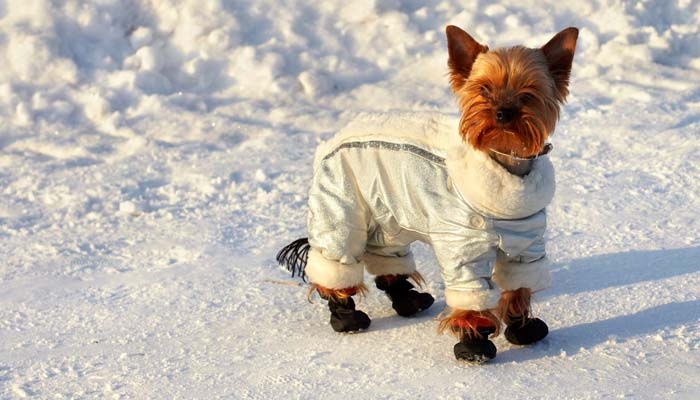 dog jacket in winter